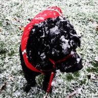 Metta pondering the snow